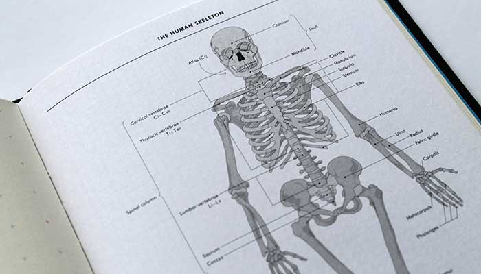 grids-and-guides-notebook-skeleton